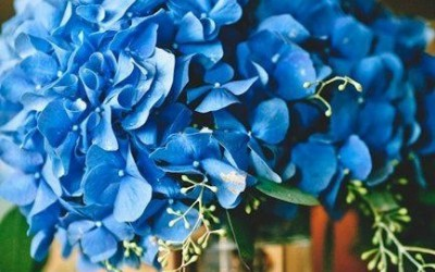 Букет невесты: голубая гортензия